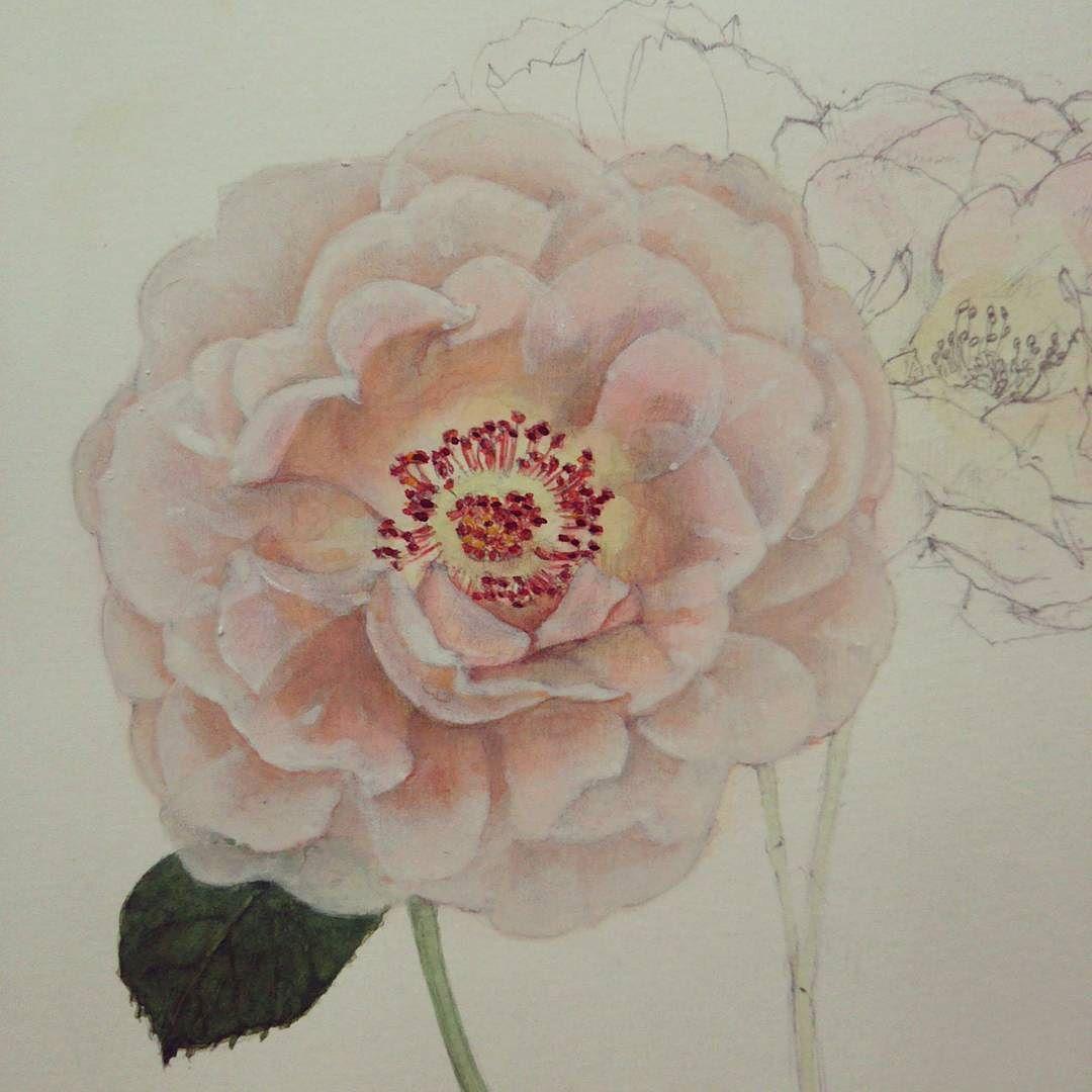 バラ ロココ 水彩画